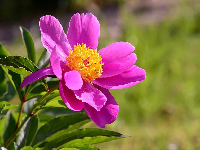 La bellezza di piante e fiori dimensione suono soft for Piante e fiori