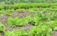 cibo salutare e biologico