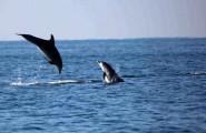 delfini-ostia-ds2news